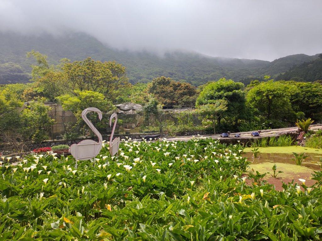 中正山步道-竹子湖來回_1361696