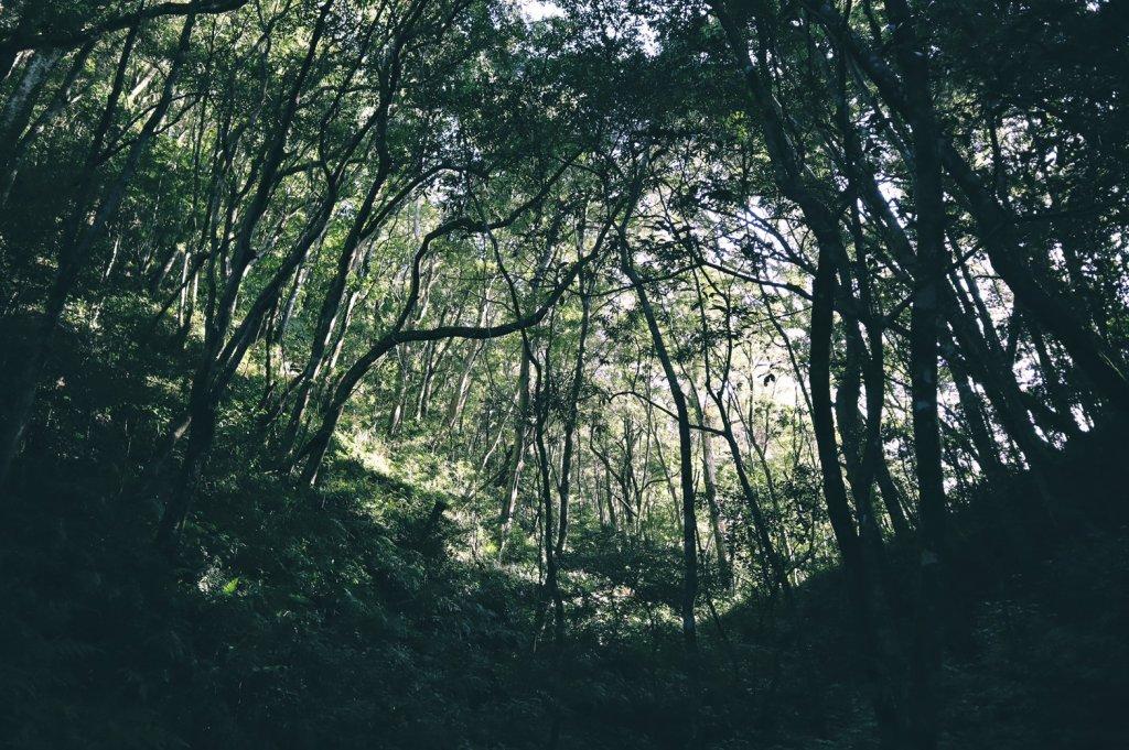 【桃園】夢幻的四稜野溪溫泉_891332