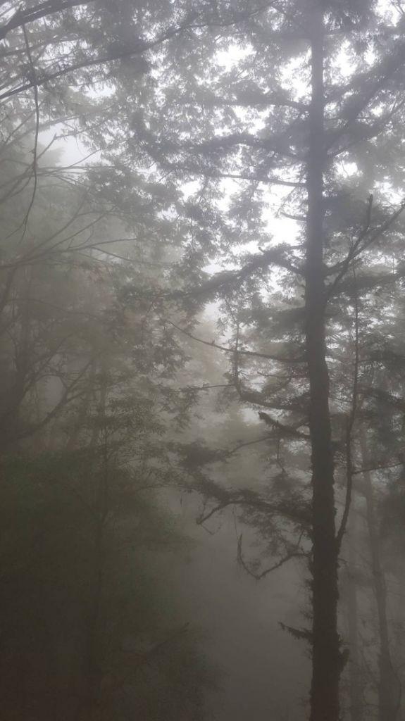 霧茫茫 美呆了_357068