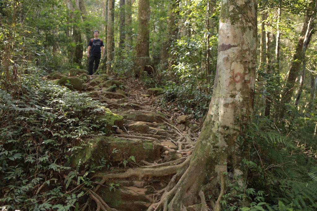 北得拉曼:巨木步道_173395