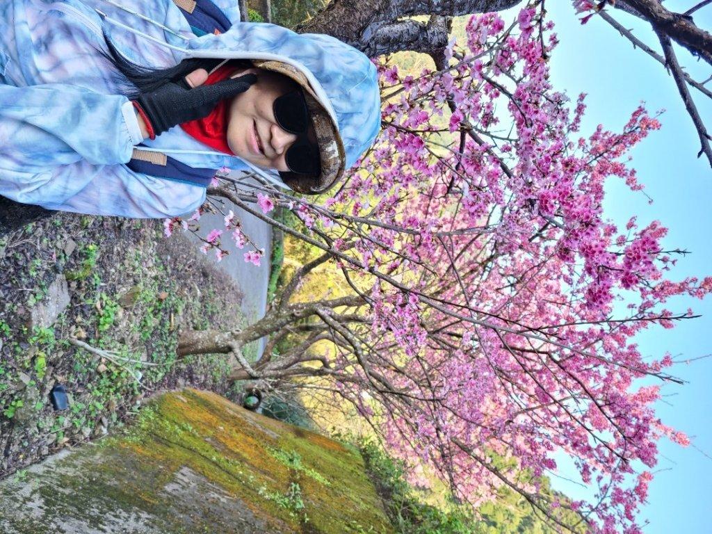 遇上櫻花季的直潭山_1252749