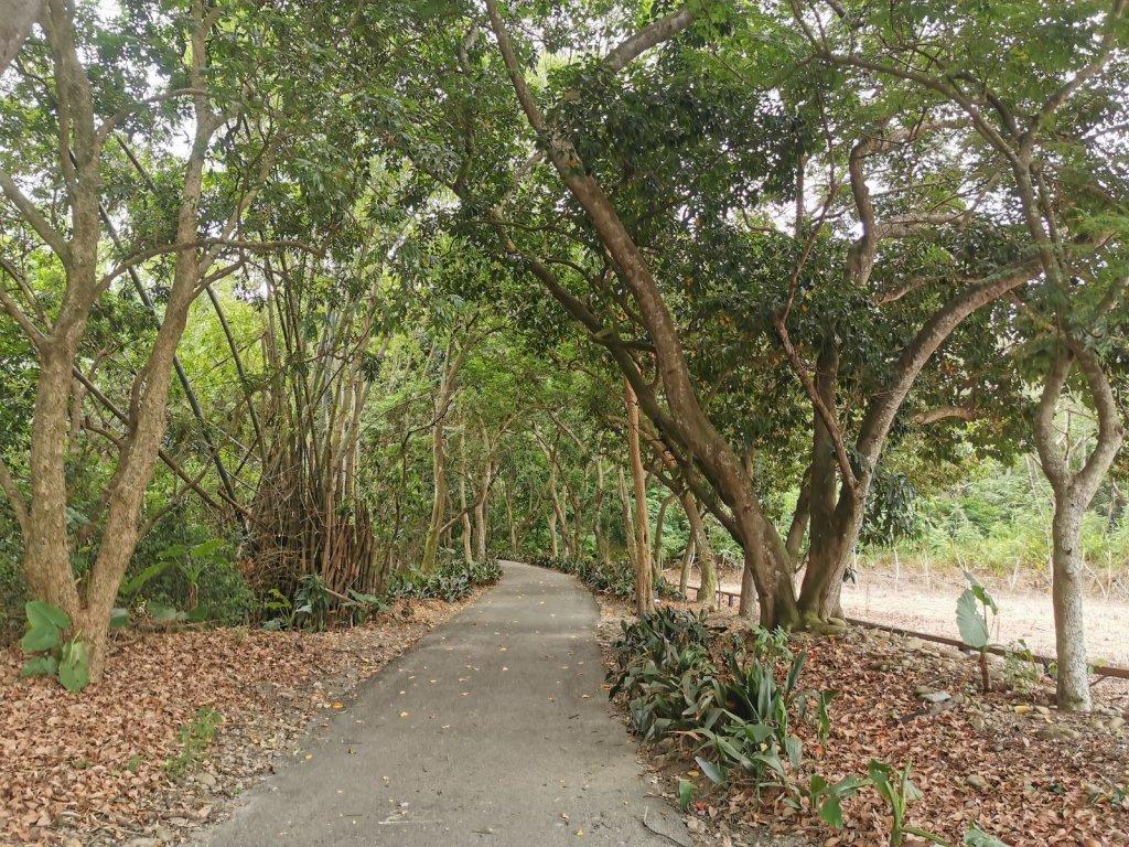 松柏嶺登廟步道-生態豐富的早期買賣古道_1049380