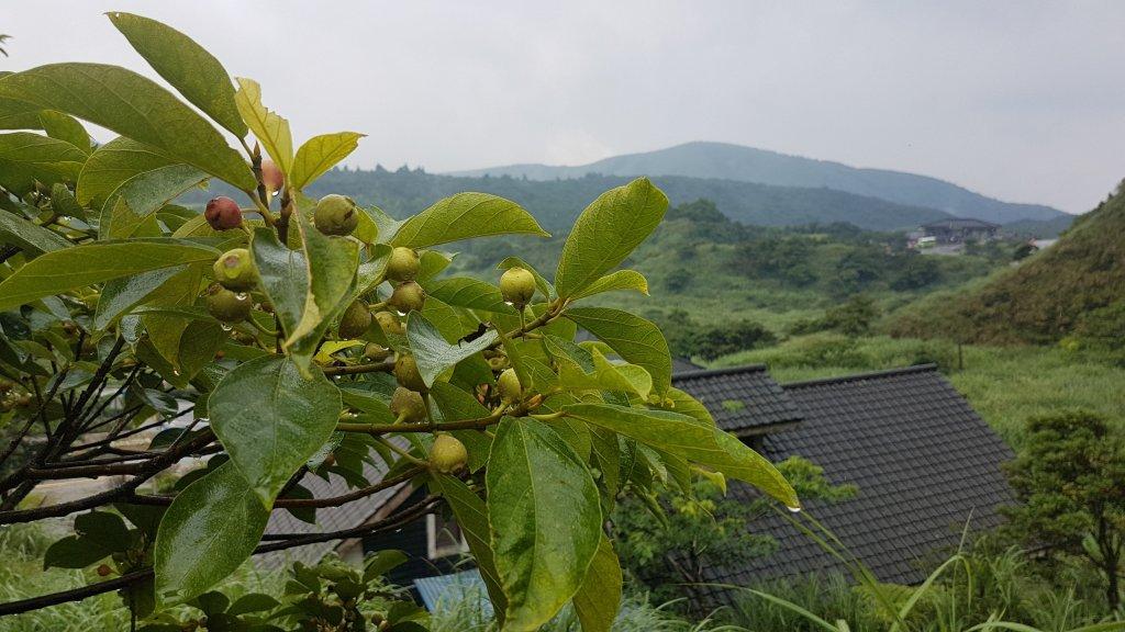 20170712陽明山東段五峰縱走_423084