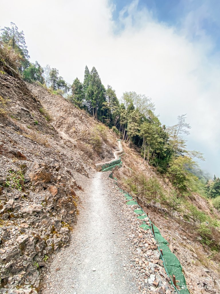 <新竹>觀霧檜山巨木群步道(雪霸國_924592
