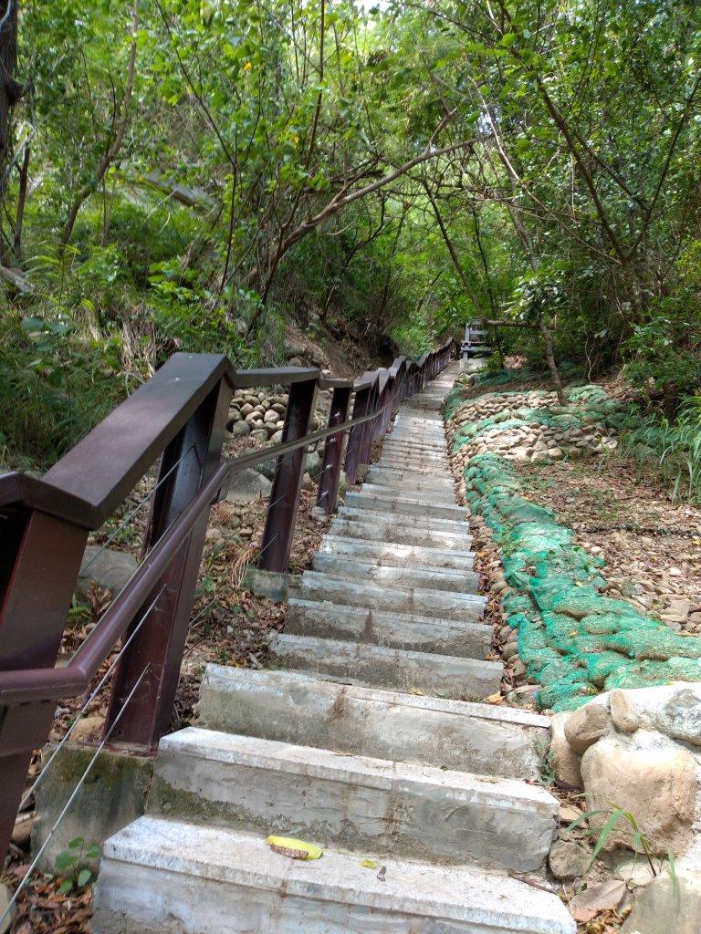 步道巡訪員 l 鯉魚山步道七月巡訪日誌_1050323
