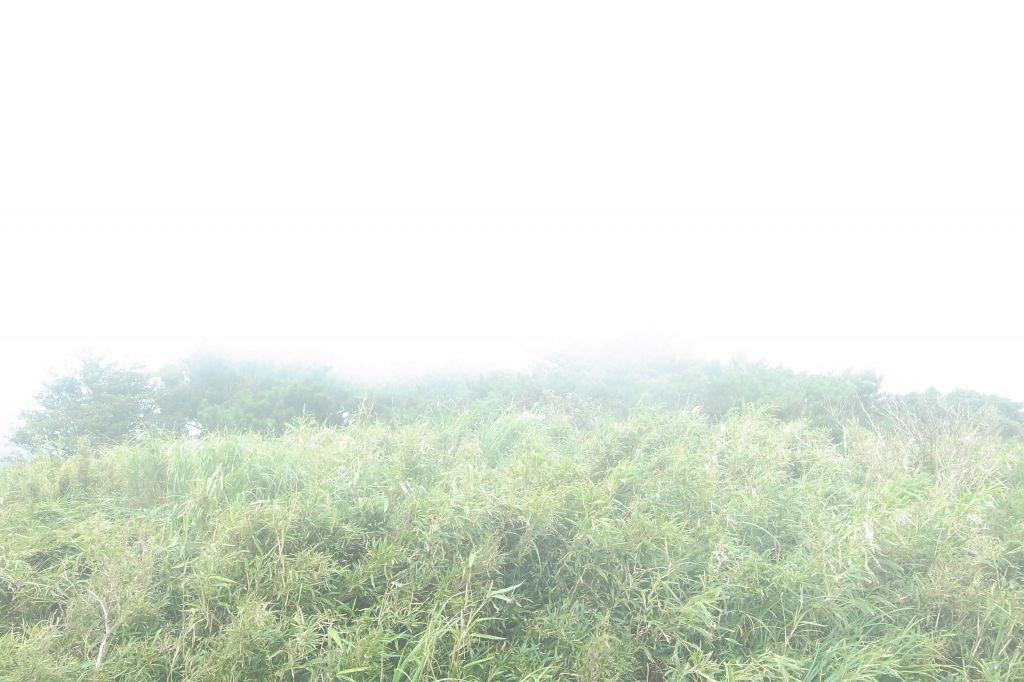小百岳第一峰~大屯山_172961