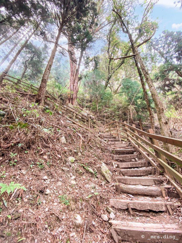 <新竹>觀霧檜山巨木群步道(雪霸國_924598