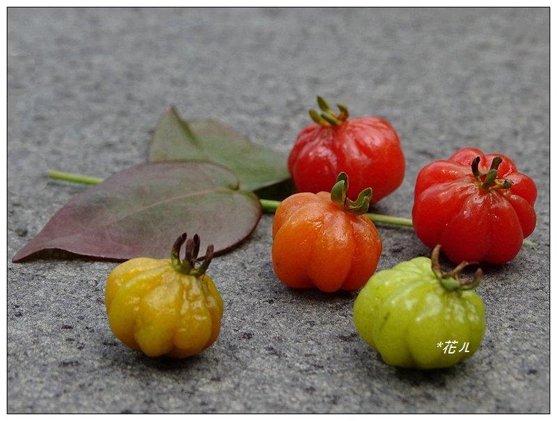 扁櫻桃的花開_835817