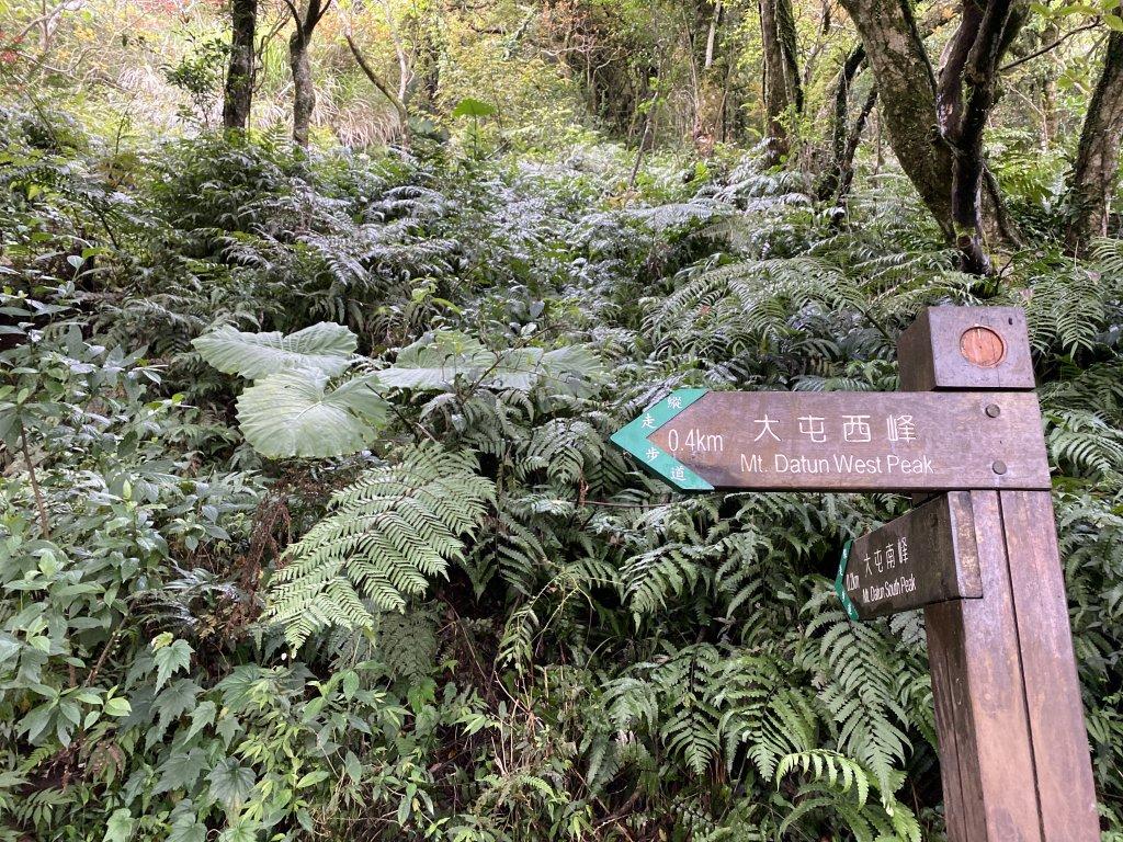 【台北登山一日十連峰】陽明山東西大縱走_1075810