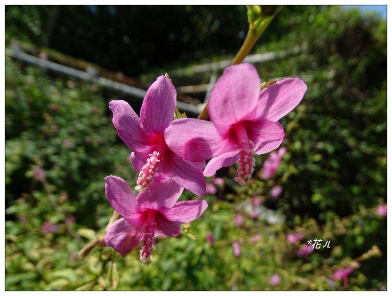 台北/植物園步道_686820
