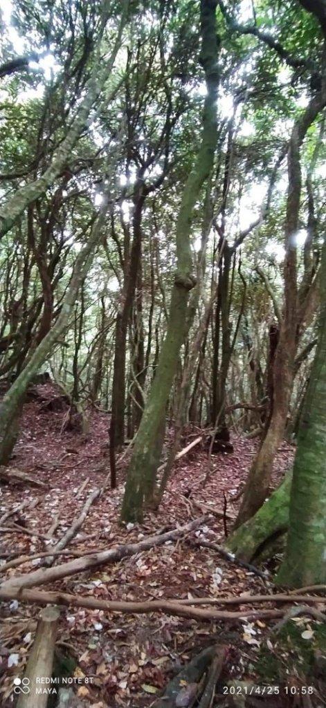 塔曼山越嶺達觀山連走拉拉山巨木群 - 神木巨木之旅_1363310