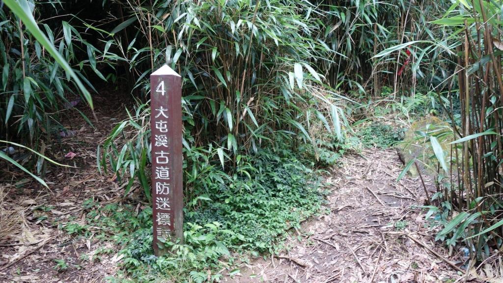 小觀音山群峰+大屯溪古道_48989