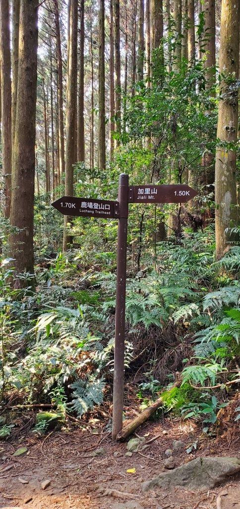 加里山登山步道_1325553