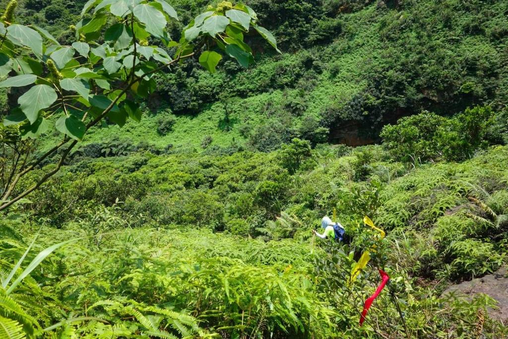 【春夏之際】山林秘境:鉅齒稜大峭壁、瑞芳的錐麓古道、小鬼瀑布_18679