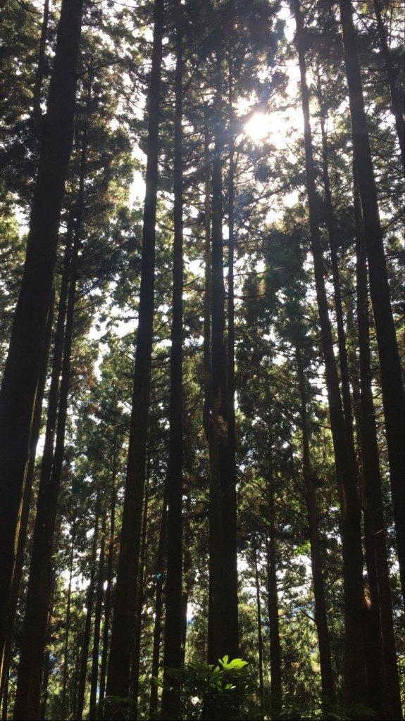 台版富士山加里山·森林系小百岳_1039722