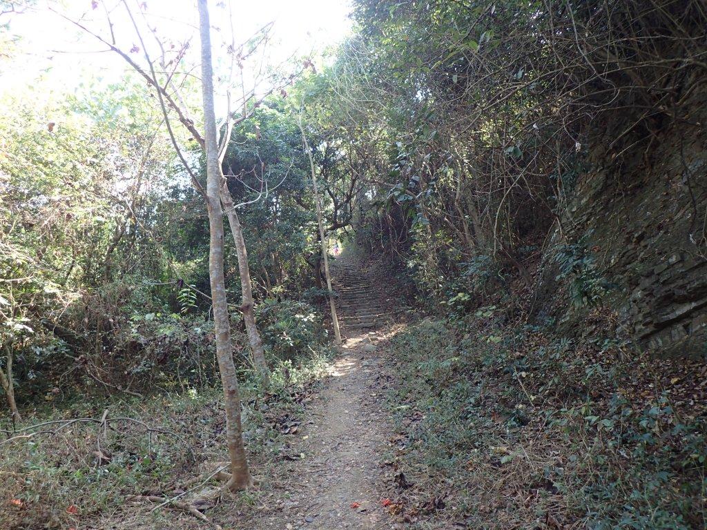 步道巡訪員│浸水營前段步道1月巡訪日誌_815022
