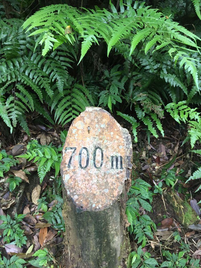 礁溪聖母山莊登山步道_354529
