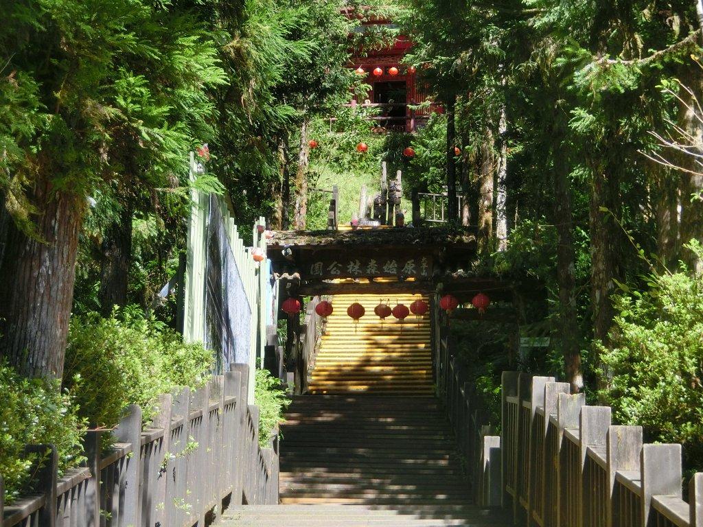 鐵杉林自然步道_672839