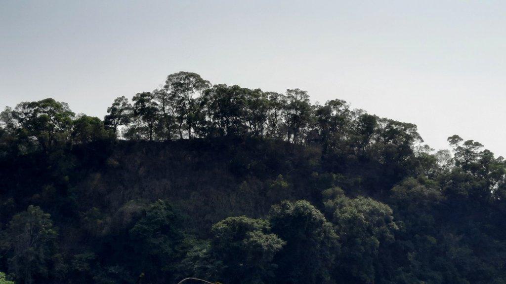 《彰化》田中森林步道O型20210228_1292474