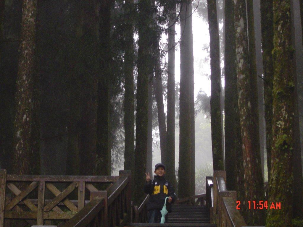 2008 May 阿里山步道_584678