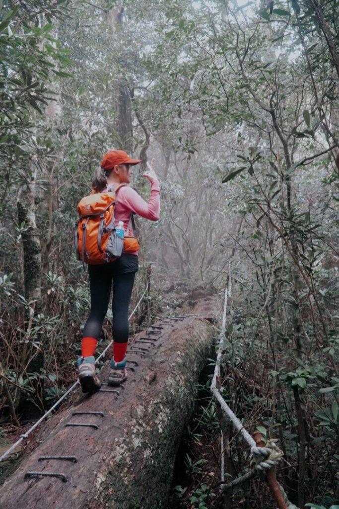 塔曼山,樹的國度。_636137