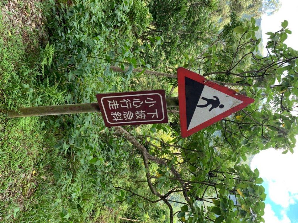台東知本森林遊樂區之1088階好漢坡_1063275