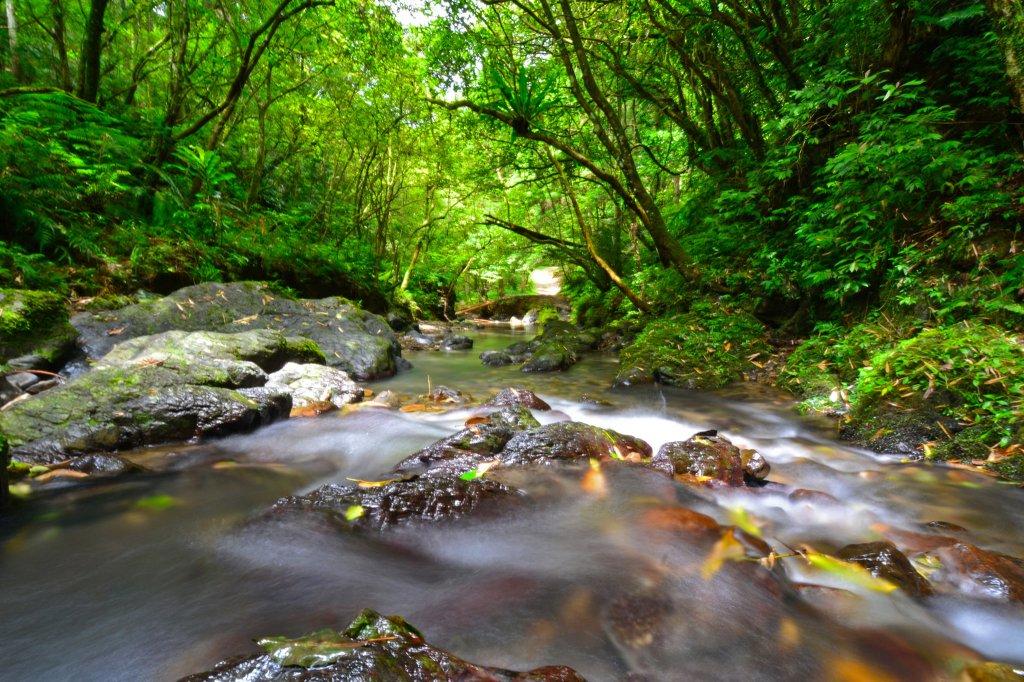 坪溪古道-走進綠色隧道的水地毯_1050424