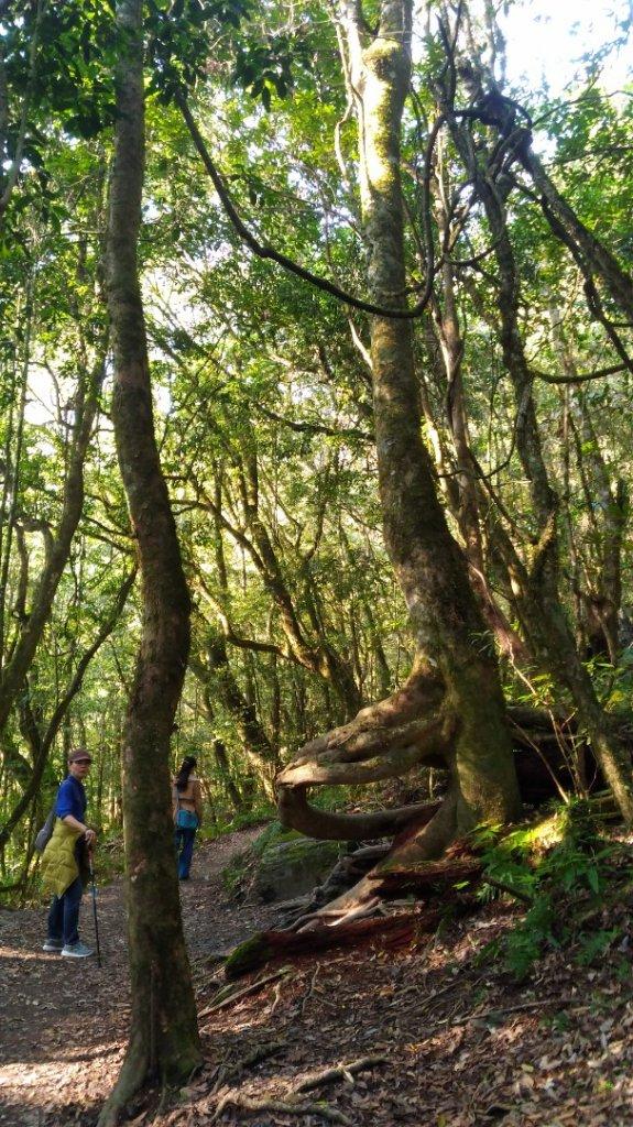 鎮西堡B區巨木群_1325605