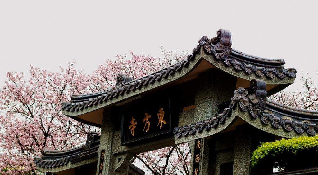 櫻花季的尾聲~在東方寺慢慢的品花落的聲音_910705