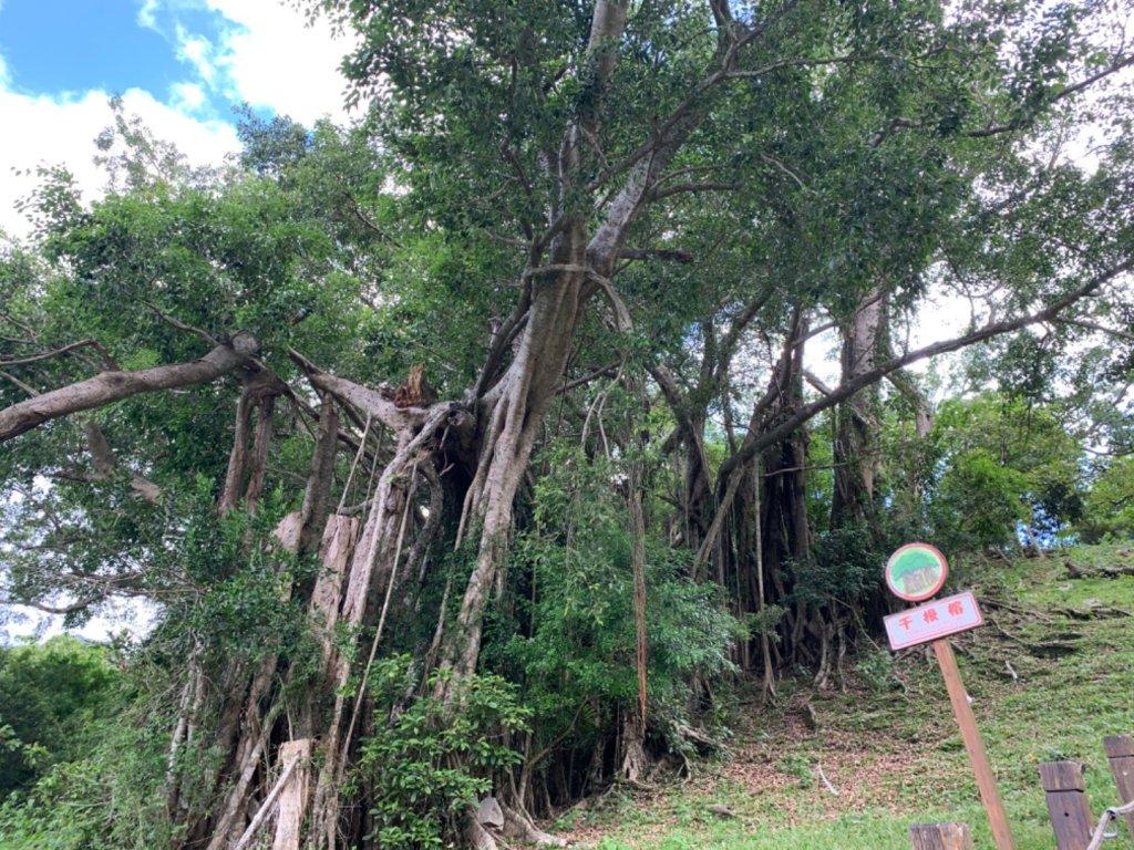台東知本森林遊樂區之1088階好漢坡_1063313