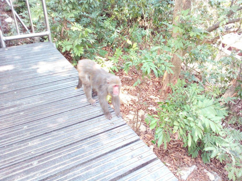 壽山看猴子_759410