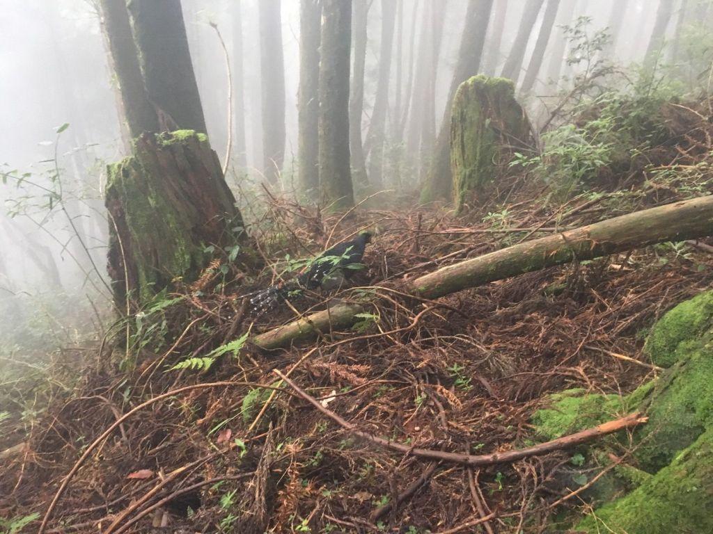 觀霧檜山巨木森林步道_171725
