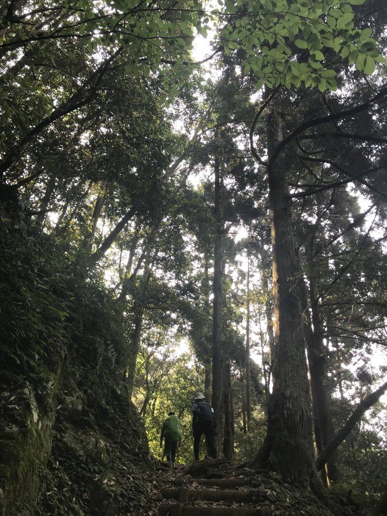快來享受森林浴~東滿步道來回_1336613