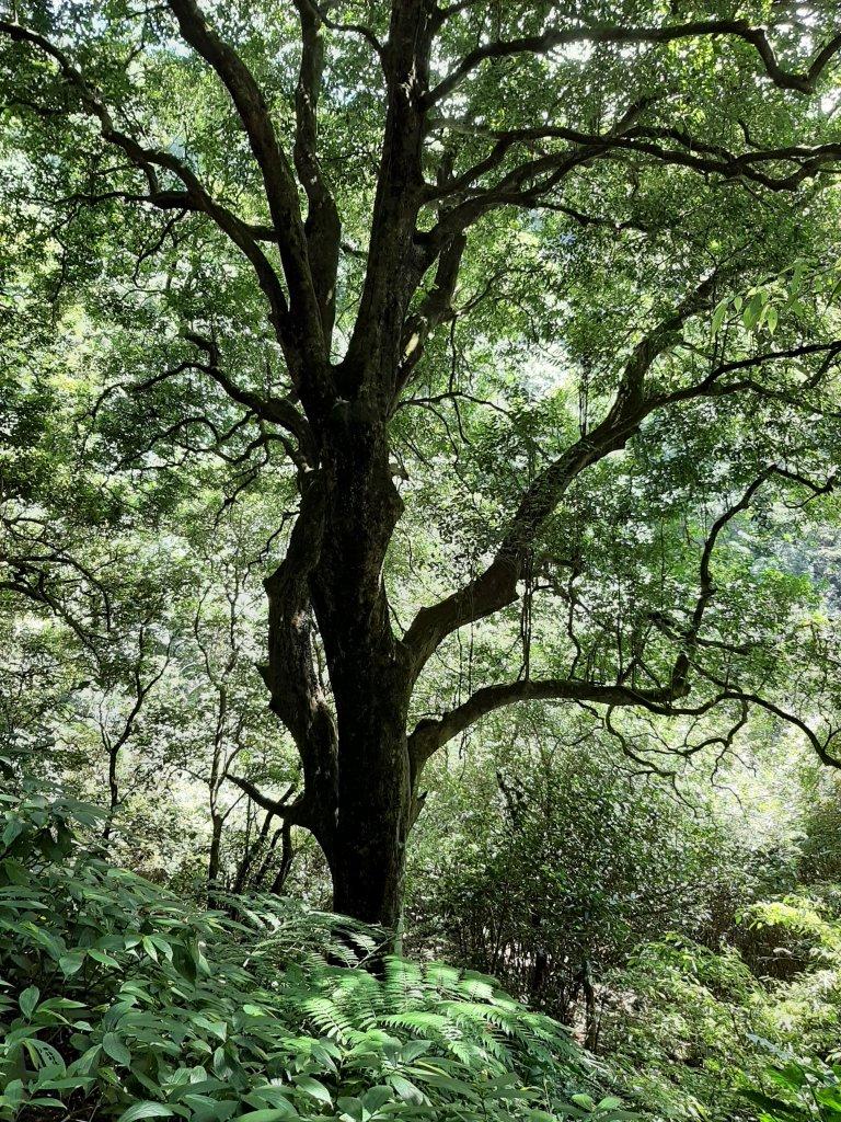 初秋走讀森林的風情與美感_1121515
