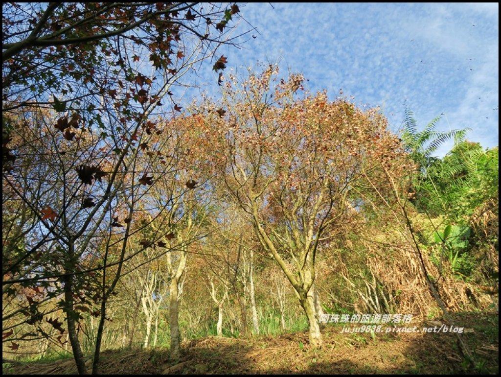 沐心泉冬季限定白雪木與黃金楓的浪漫相遇_481870