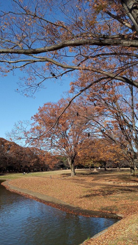 東京都澀谷區代々木公園_761018