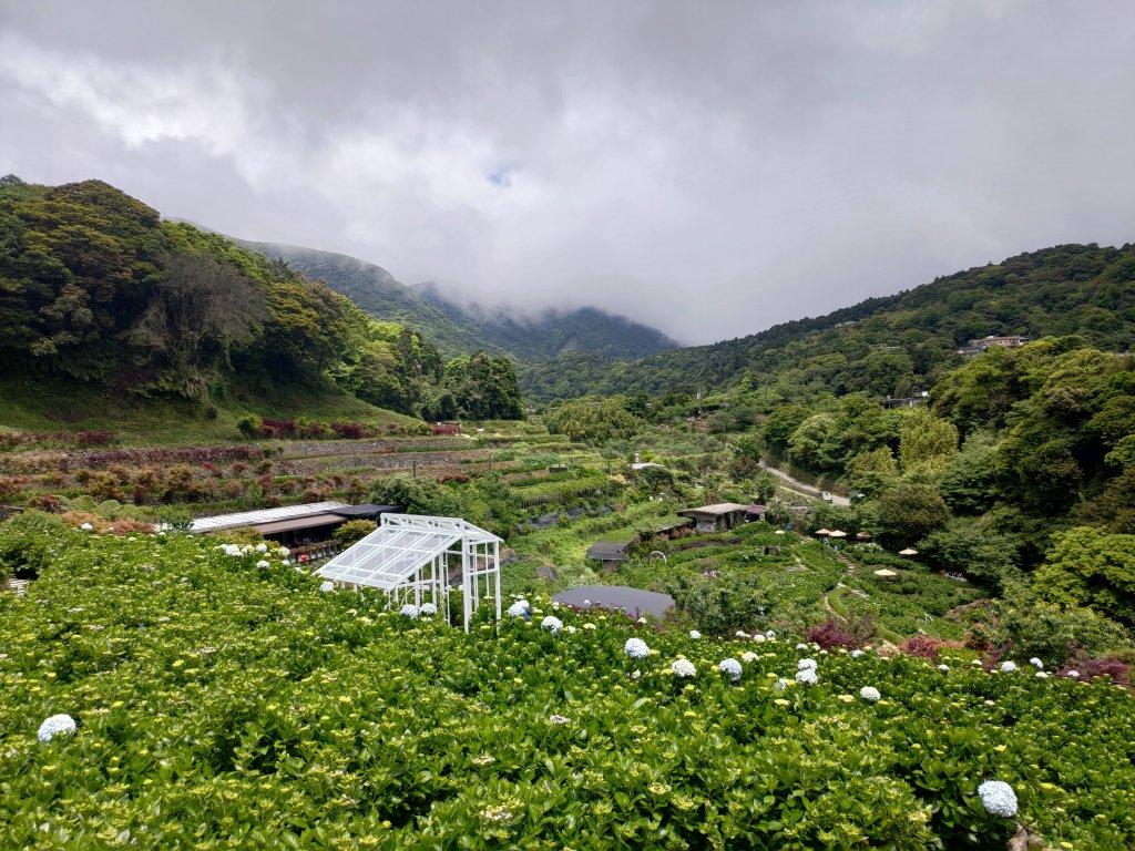中正山步道-竹子湖來回_1361690