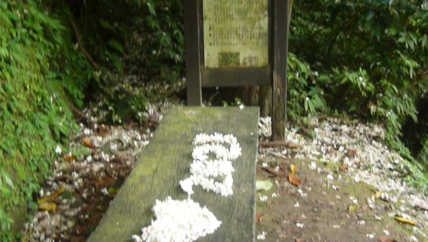 浪漫四月雪~土城桐花公園_1362450