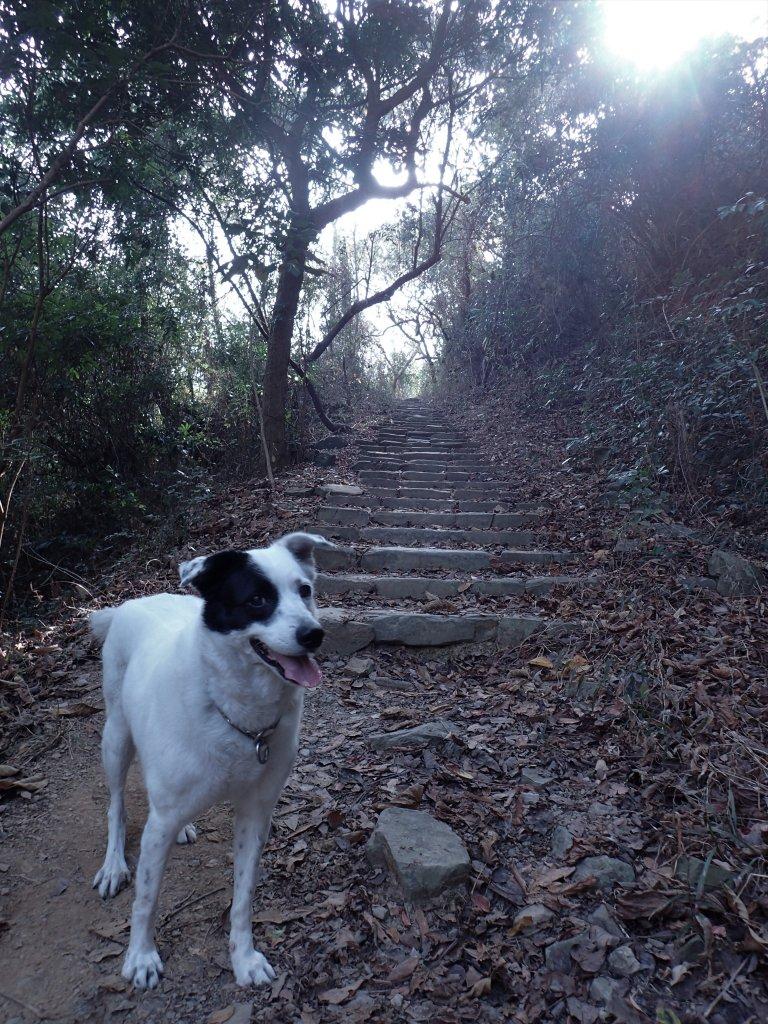 步道巡訪員│浸水營前段步道2月巡訪日誌_931659