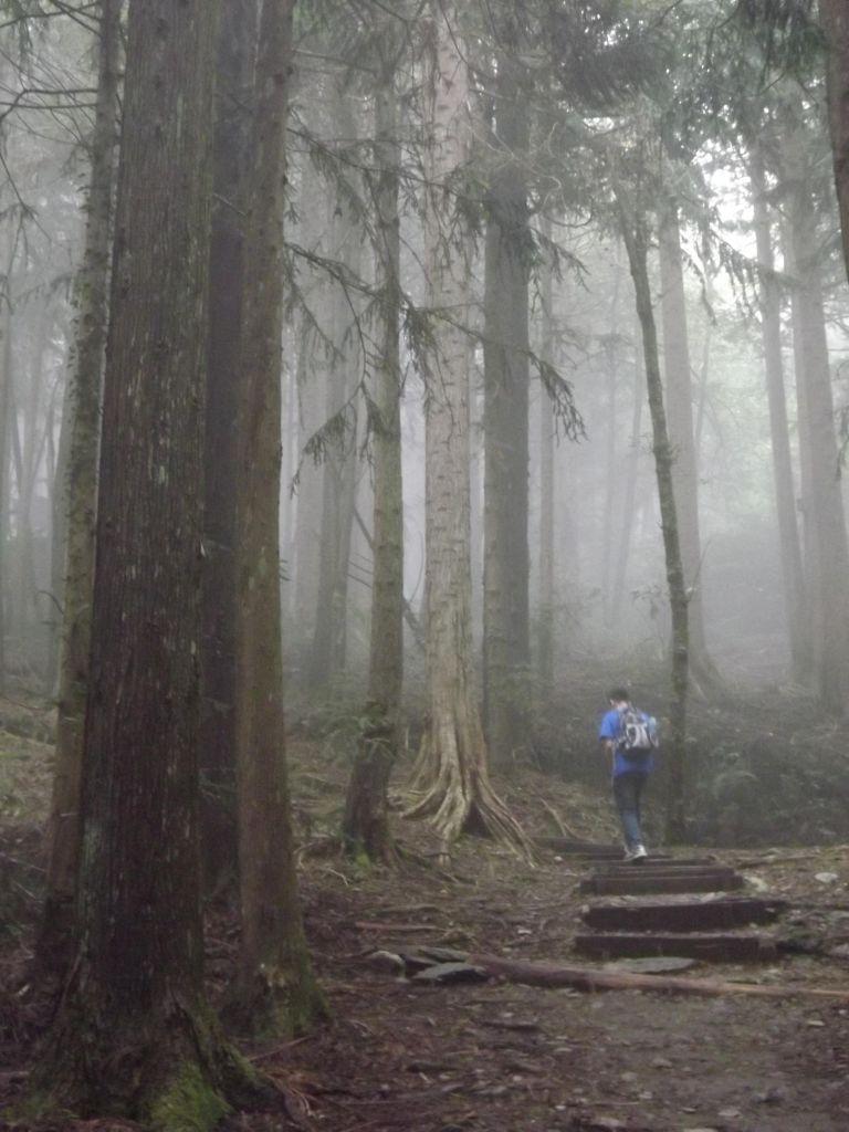 20160821觀霧瀑布步道_187198