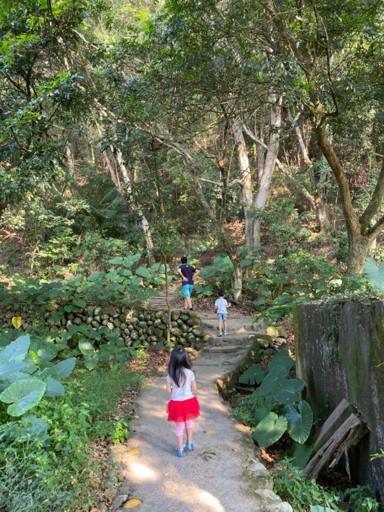 20191019 麒麟山森林步道_706142