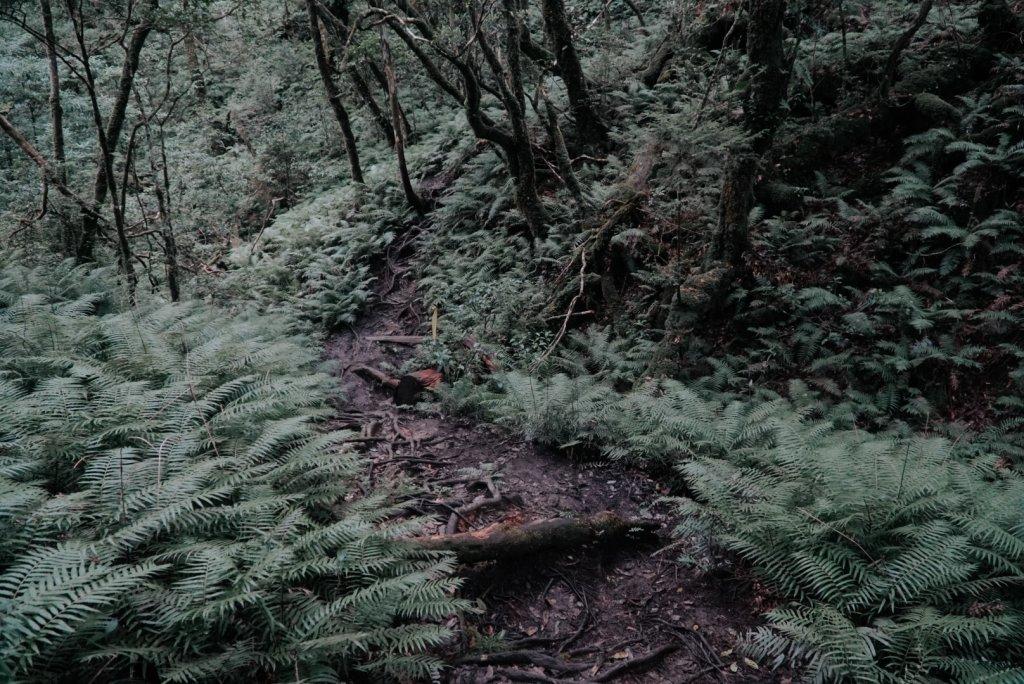 塔曼山,樹的國度。_636141