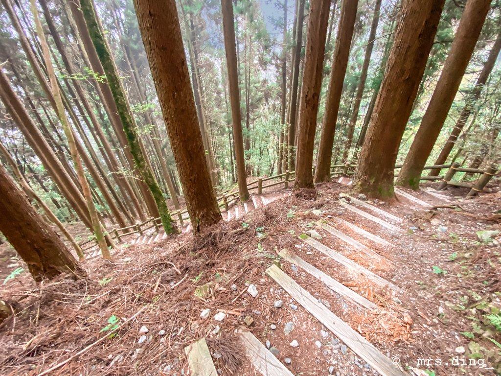 <新竹>觀霧檜山巨木群步道(雪霸國_924595