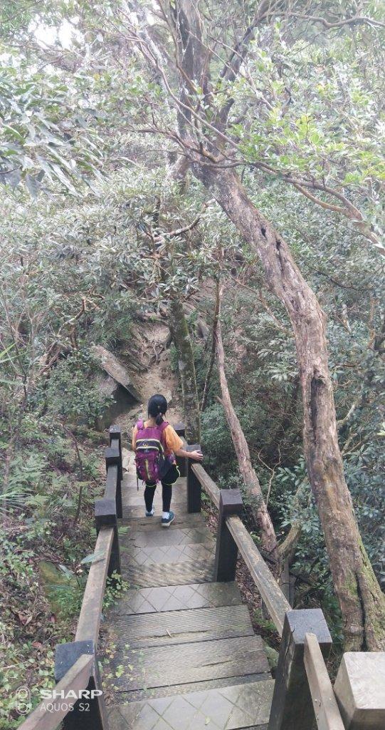 尖石~北得拉曼神木、瀑布_704977