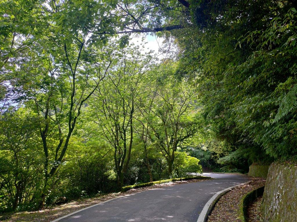 中正山步道-竹子湖來回_1361702