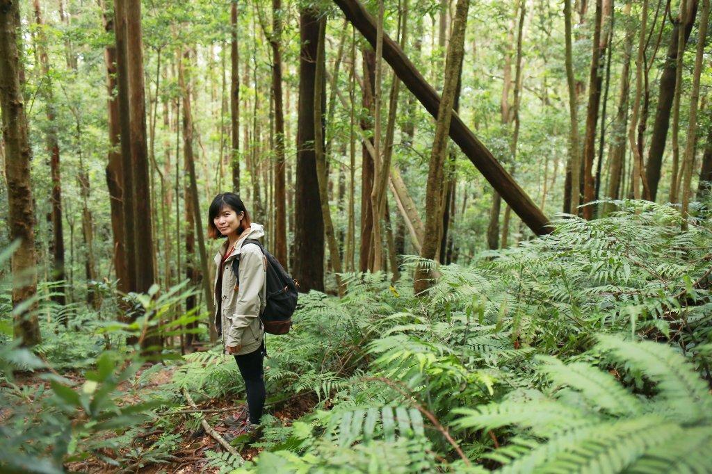 北得拉曼山:氤氳森林_695891