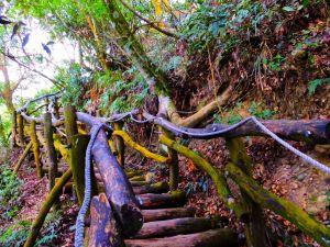 萬里長城般的木棧道【台中大坑】頭嵙山