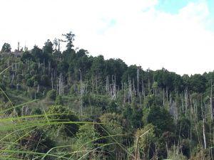 加羅湖-加羅山-偉蛋池-檜木池-