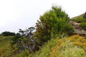 武陵四秀登山步道