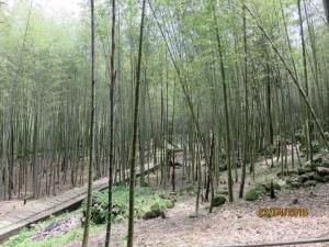 小半天長源圳生態步道